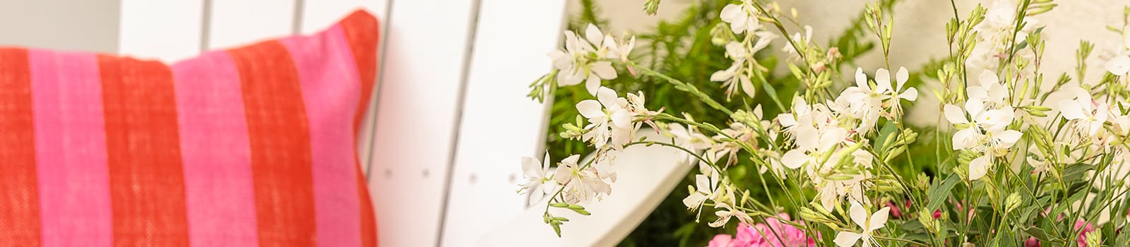 Proven Winners® Gaura Stratosphere® from Sobkowich Greenhouses
